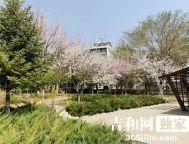 春花烂漫—长春市御花园