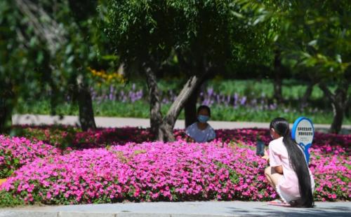 你知道吗?长春这个公园里藏着一个貌美的野花园