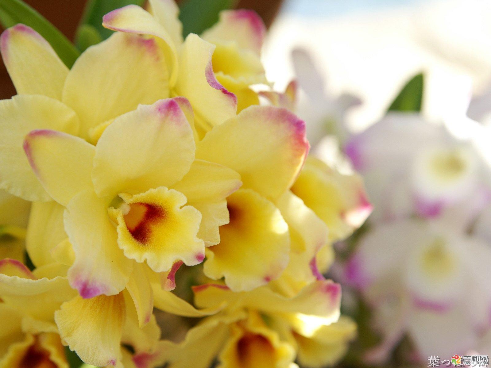"""礼物之十一:鲜花 一束黄色康乃馨或石斛兰,以表达对父亲的尊敬和感谢之情。在日本、台湾等地,石斛兰被视为""""父爱之花""""。此外,白月季、三色堇、腊梅也是父亲节的理想礼品。 让老爸也体会一下收花的感觉嘛,呵呵! 如果你父亲是个经常出去社交的人,可以送社交用品,领带的话女性的眼光可能和男人不同,建议不要送,手表和皮带倒是容易选。还可以送剃须刀,男士香水等。 如果你父亲是个顾家的人,可以送点家用必须品,比如厨房刀具(前提是他喜欢做菜),或者折叠晾衣架,这样他也不会说你乱花钱。"""