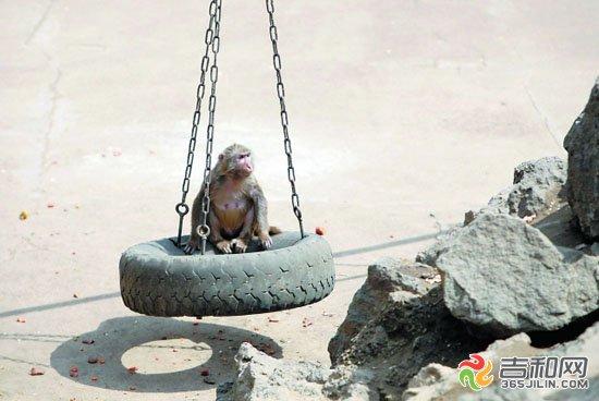 吉林江南公园动物卖萌(2)