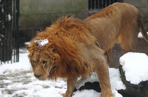 动物园游客被指不尊重生命(3)