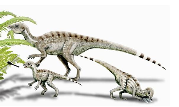 9亿年前的动物
