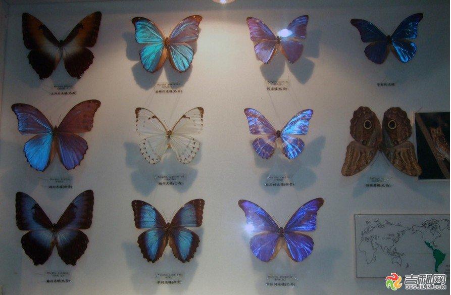 其中植物标本23353件,脊椎动物标本2899件,昆虫标本59000件.