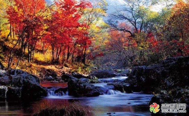 医保社保 办事服务 投诉曝光     庆岭森林风景区位于吉林市所属蛟河